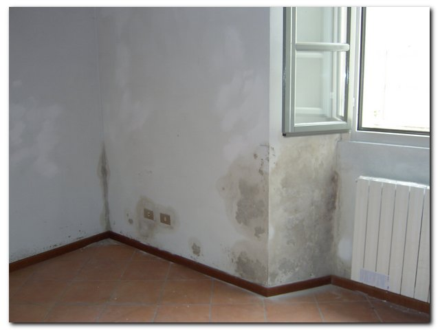 Comunicati stampa - Muffa sui muri esterni ...